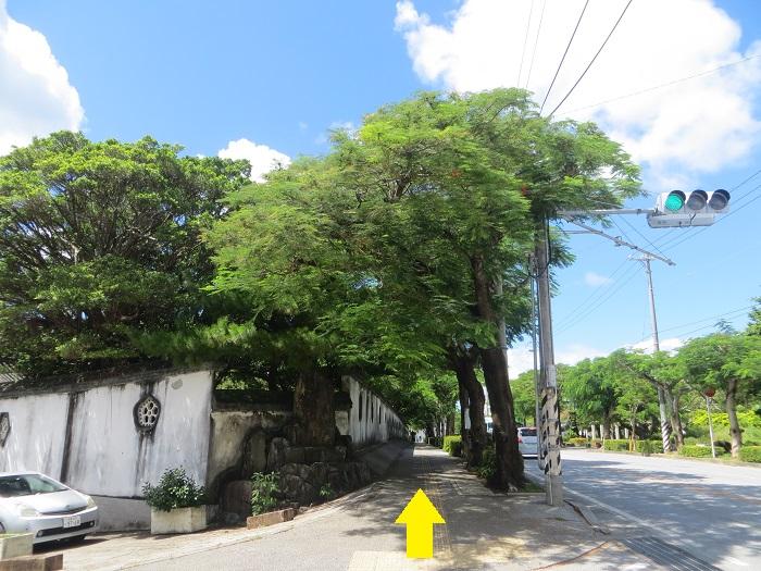 緑の綺麗な道