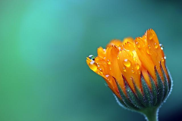 水滴がついた一輪の花